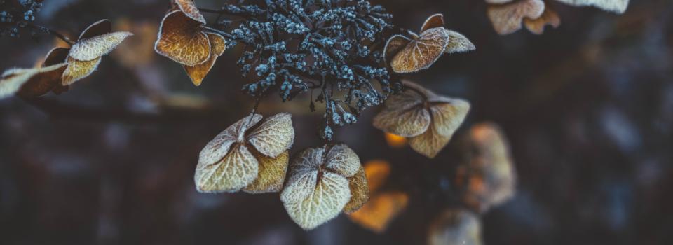 Fall Winter Gardening