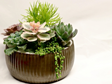 Select Succulents in Vintage Tin